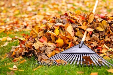 How to collect leaves